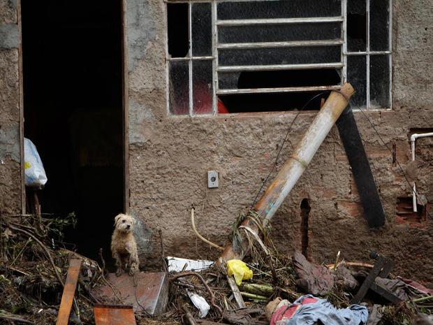 A dog stands at the entrance of a damaged house after a landslide in Teresopolis, Brazil.