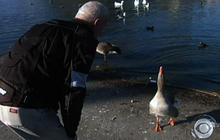 Man, goose form odd-couple friendship