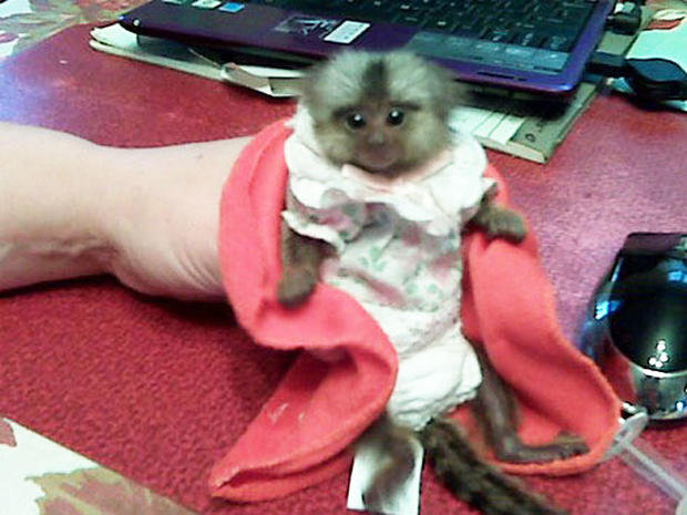 Woman goes to court with a monkey in her bra