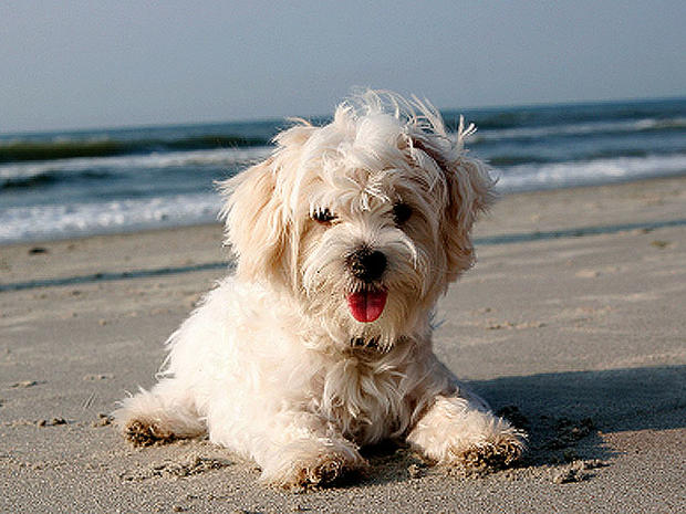 Got allergies? 15 hypoallergenic dogs and cats