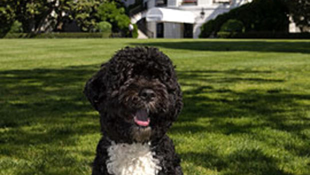 Are Portuguese Water Dogs Good Family Pets