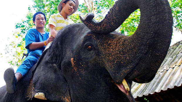 Elephants vs. autism in Thailand