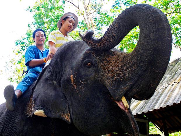 elephant-therapy-AP110421058139.jpg