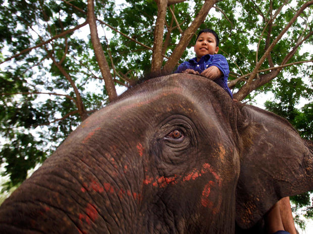 elephant, therapy, autism, thailand, thai, kids, autistic, animals