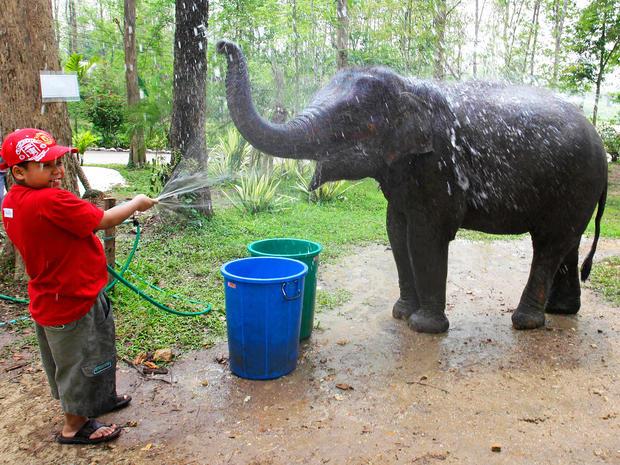 elephant-therapy3-AP110421058154.jpg