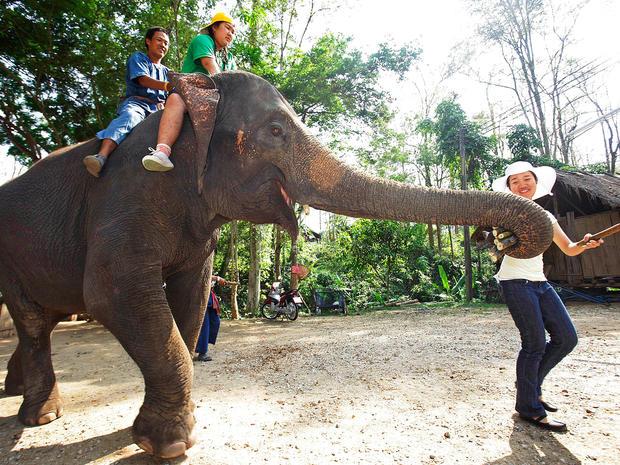 elephant-therapy7-AP110422029915.jpg