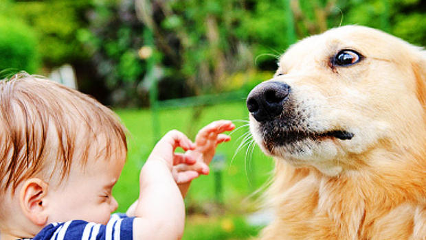 Dogs And Cats Help Babies Health