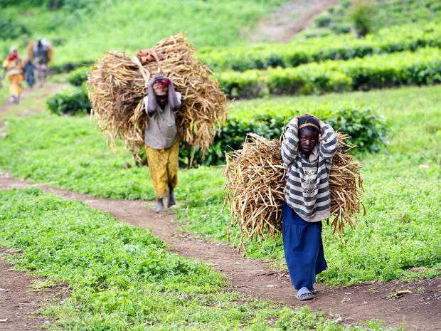 African farmers generic