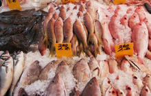 Fish fraud: Are you sure about what you're eating?