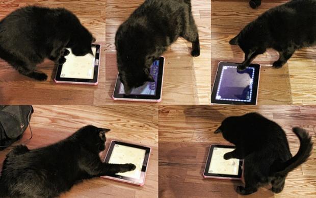 ipadcats.jpg