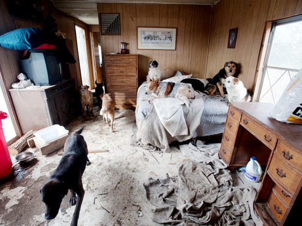the issue of hoarding animals An animal hoarder's behavior translates into filthy, cramped, extremely crowded conditions for many animals.