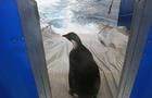 Penguin_123700067.jpg