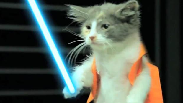 jedi kittens strike back revenge is a dish best served