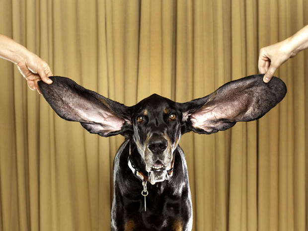 Longest Ears Bizarre Bodies 9 New World Record Holders From