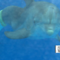 es_0922_DOLPHIN_11.png