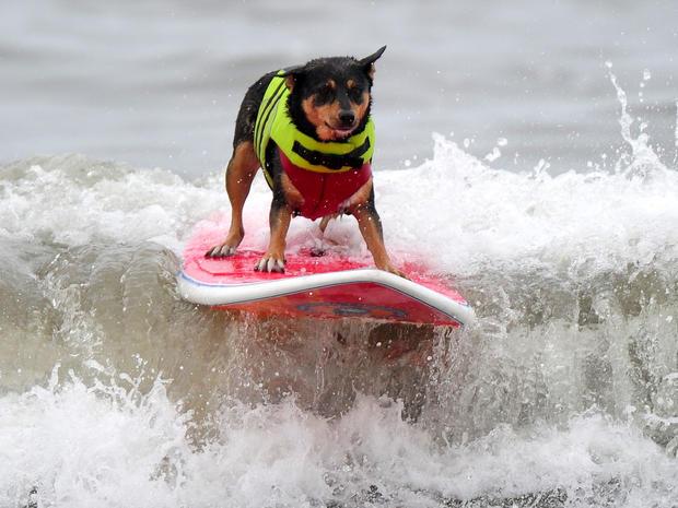 dog_surfing_1.jpg