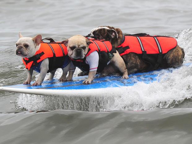 dog_surfing_7.jpg