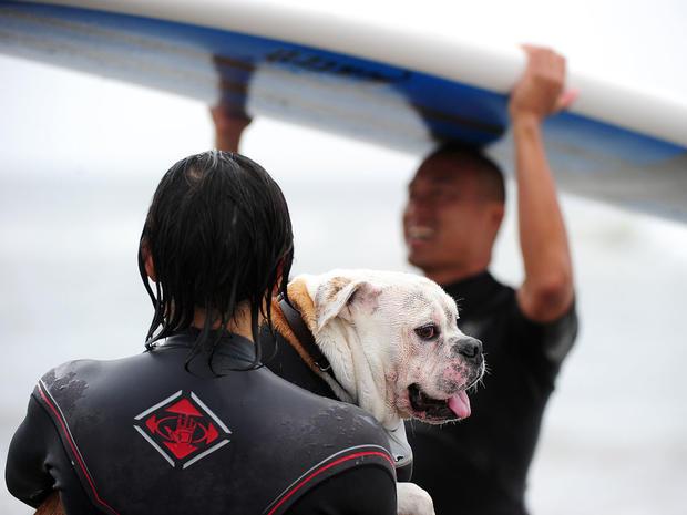 dog_surfing_10.jpg