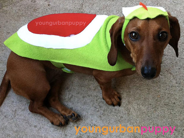 & Tron - Dogs in geeky costumes - Pictures - CBS News