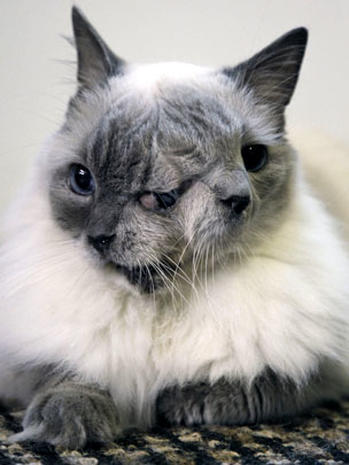 Two-faced cat turns 12: Meet Frank and Louie