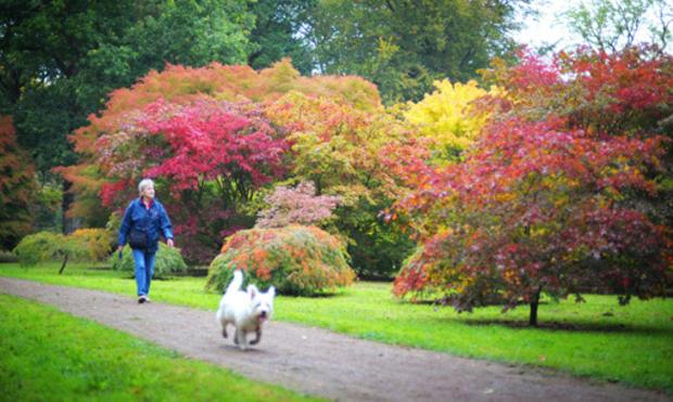 Fall_Foliage_wide_AP110925022029.jpg