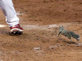 Skip Schumaker and squirrel