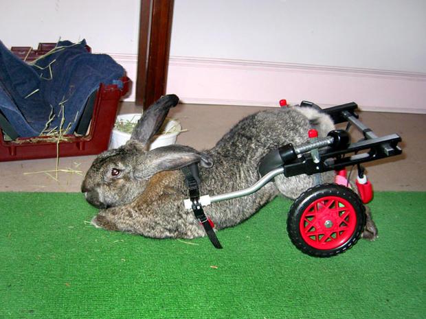 rabbitonwheels.jpg