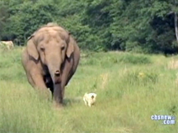 Unlikely friendship of elephant and dog