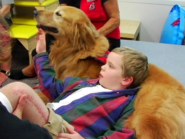 therapy dogs research papers Iii abstract this case study focused on the addition of a therapy dog in an art i level class at a public high school level that included students with autism spectrum disorder.