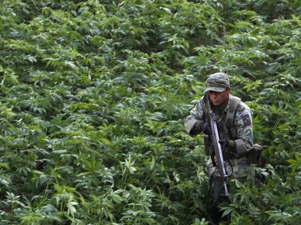 Mexico, marijuana, drug war, drug trade, cartel, army, Culiacan