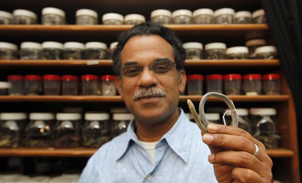 Legless, underground amphibians discovered in India