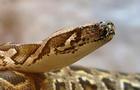 120225-snake-image5150762.jpg
