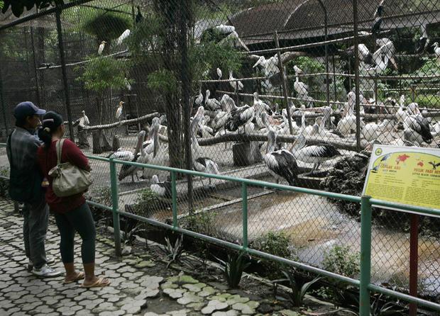 SurabayaZoo_AP120307061487.jpg