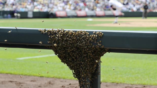 Bees invade stadium
