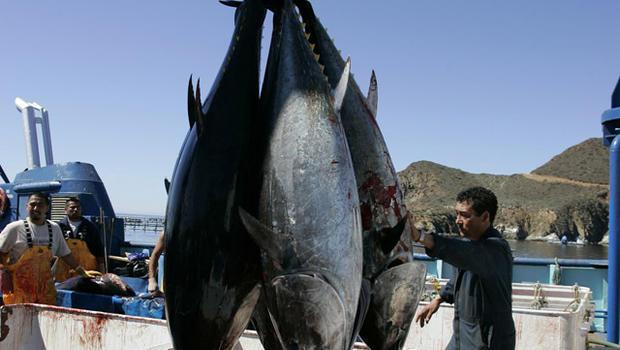 070305-bluefin_tuna-AP070305143086.jpg
