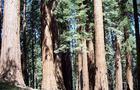 Sequoia-national-park.jpg