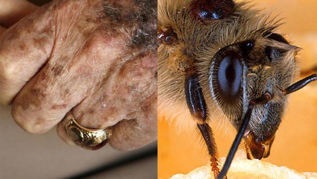 Longevity_elderly_bees.jpg