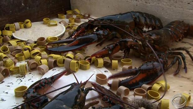brown_lobster.jpg