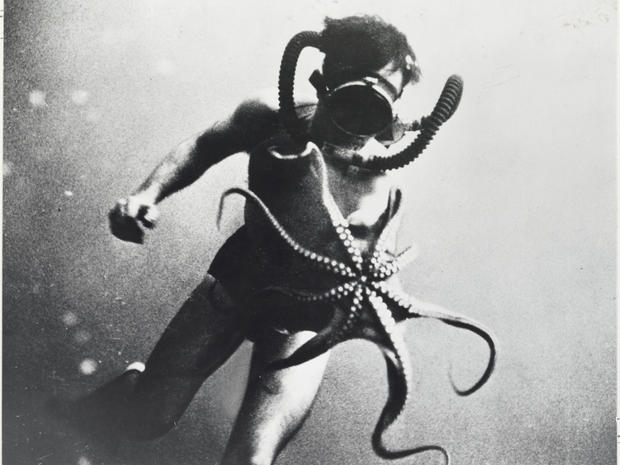 A diver swims with an octopus, whose arms measured three feet long, Mediterranean Sea.