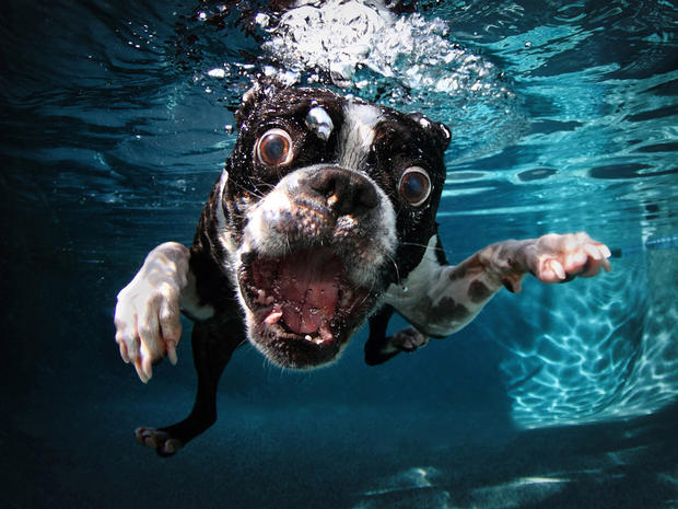 A Dog in Water