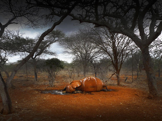 Blood & ivory: Elephant poaching in Kenya