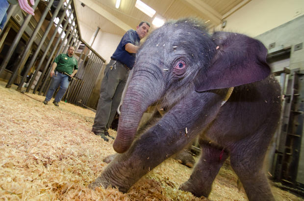 Elephant born at Oregon Zoo