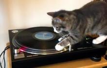 """A feline """"spin"""" on Bob Marley"""