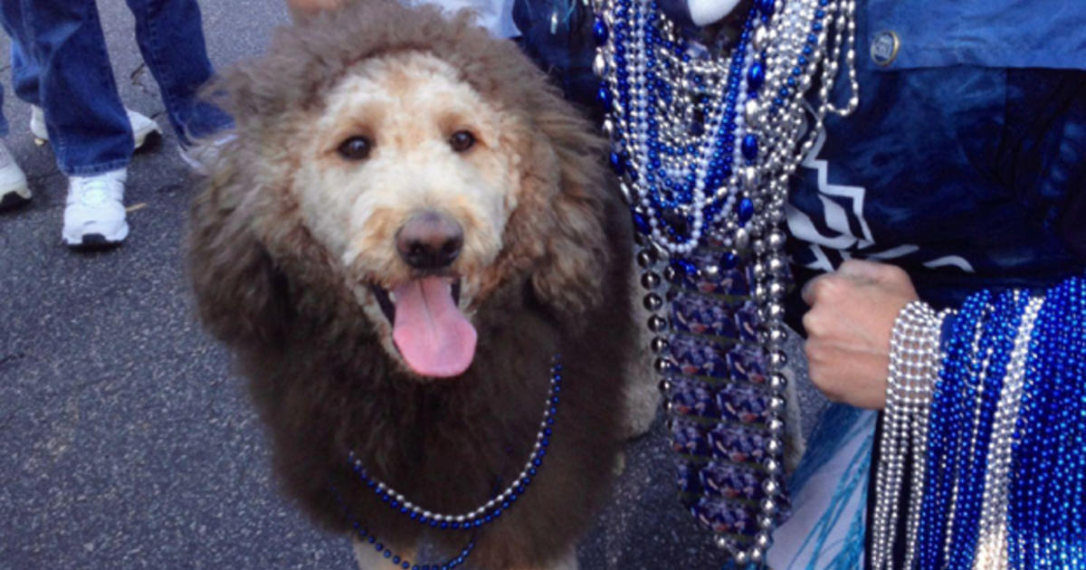 Lion Dog Gives Virginia Residents A Scare Cbs News