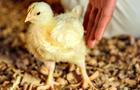 Pfizer animal health business Zoetis
