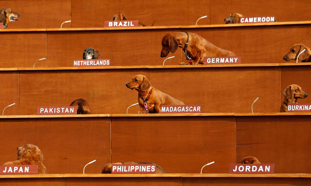 Dachshund United Nations