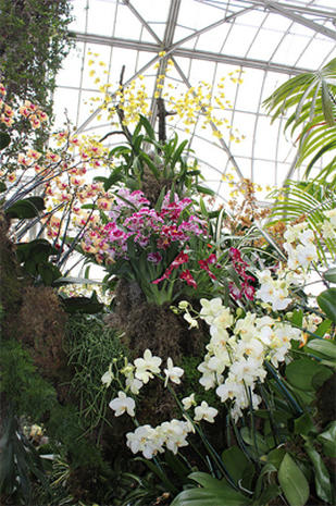Orchid extravaganza at New York City Botanical Garden