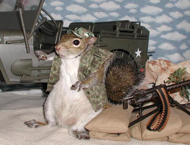 035_Sugar_Bush_Squirrels_Waitin_for_the_Enemy.jpg