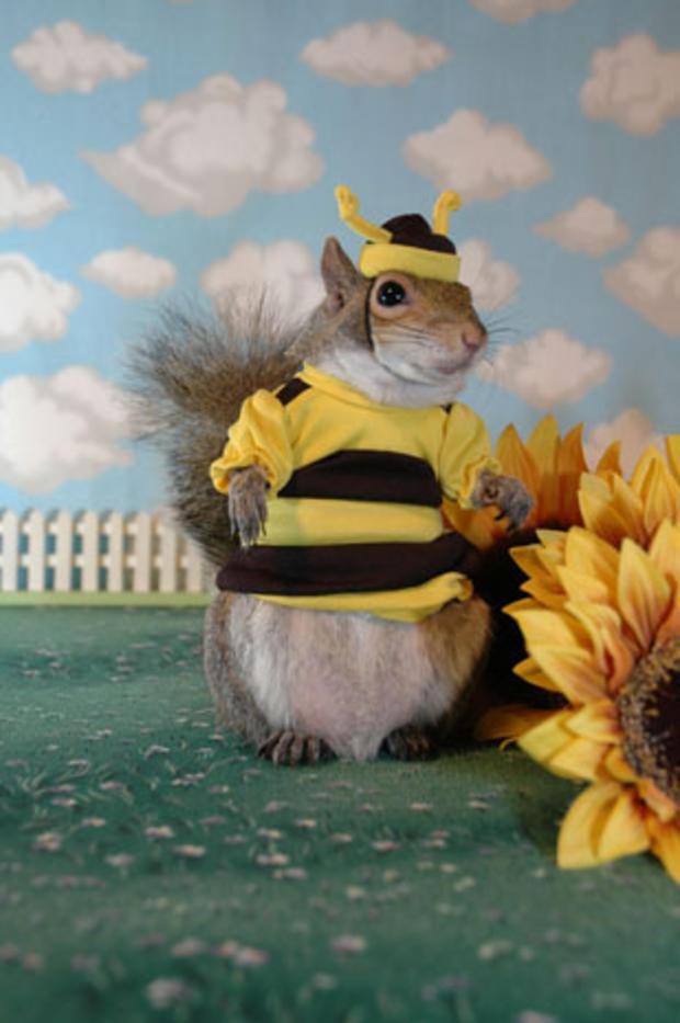 029_Sugar_Bush_says_Dont_worry,_Bee_happy.jpg