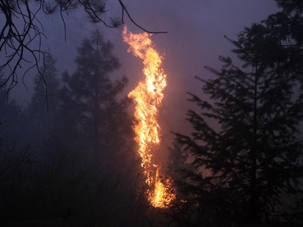Wildfire_AP690841616249.jpg